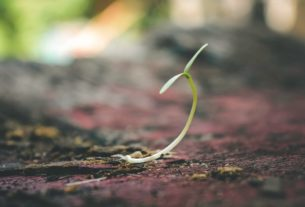5 Steps to Achieving Your Goals, Or Watering the Seeds You Have Planted- An Allegory for Business